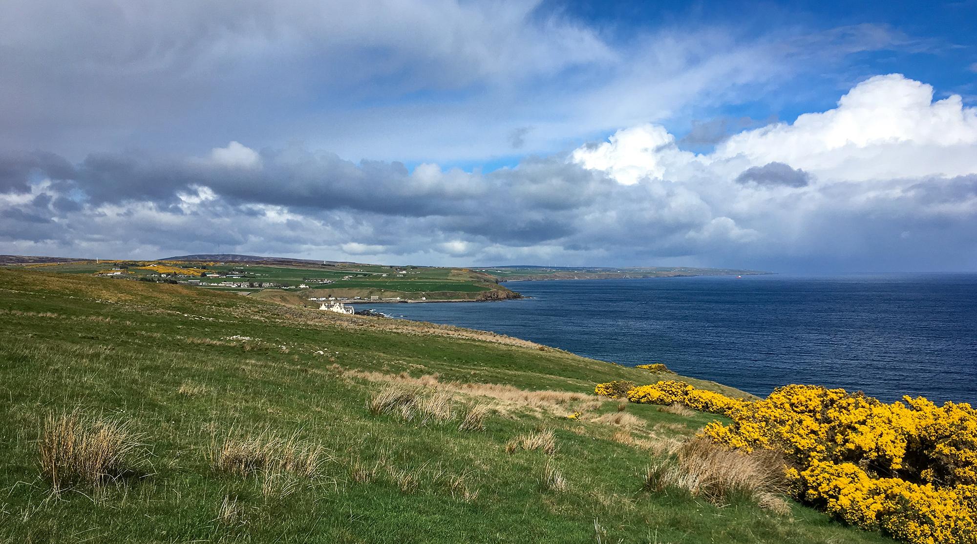 Küstenlandschaft mit Gras und Gisnter, dahinter Dunbeath