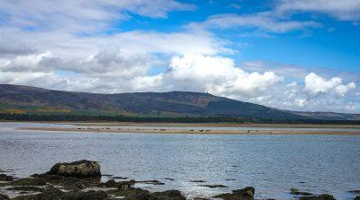 Robben am Loch Fleet