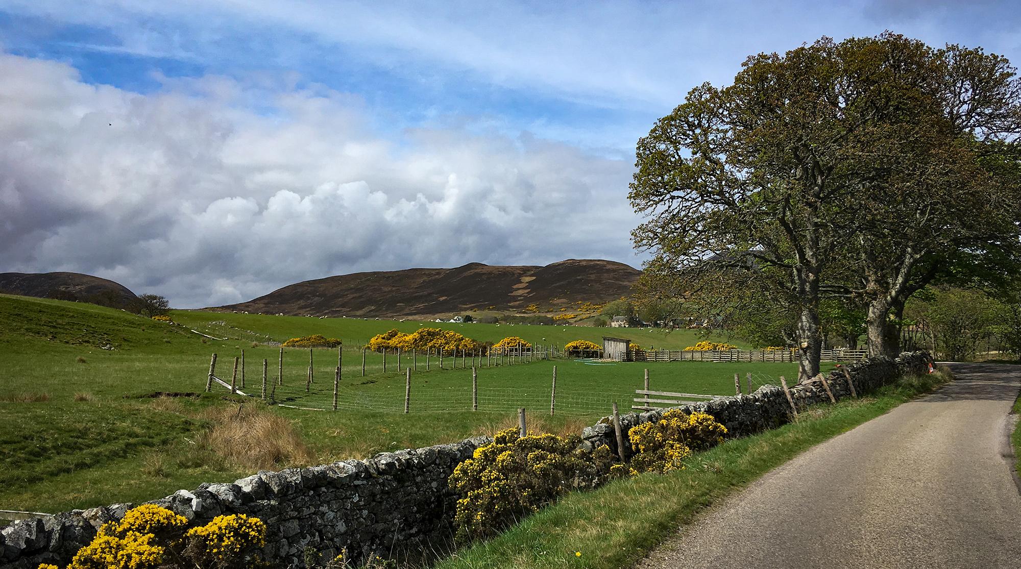 Single Road am Loch Fleet mit Ginster und Weideland