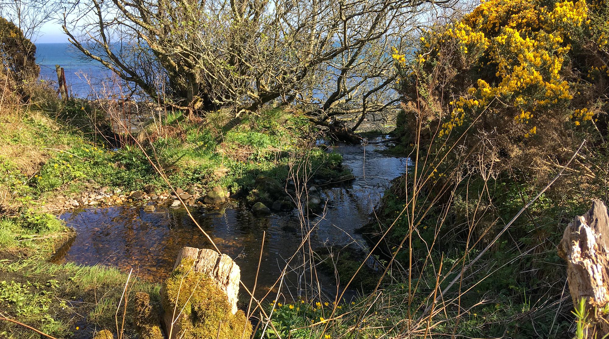 Teich mit Vegetation oberhalb des Sputie Burn