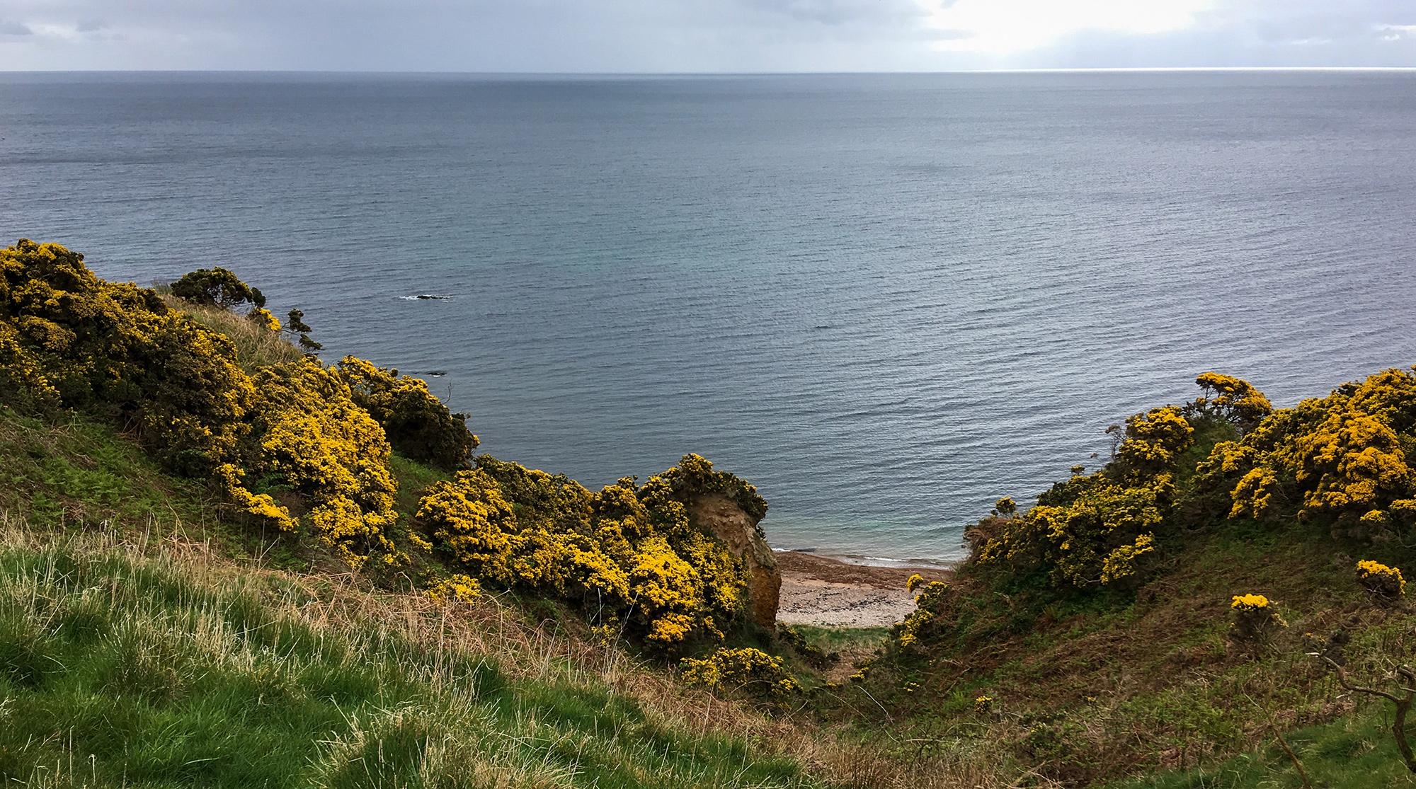 Blick über einen schmalen Einschnitt mit Ginster auf das Meer
