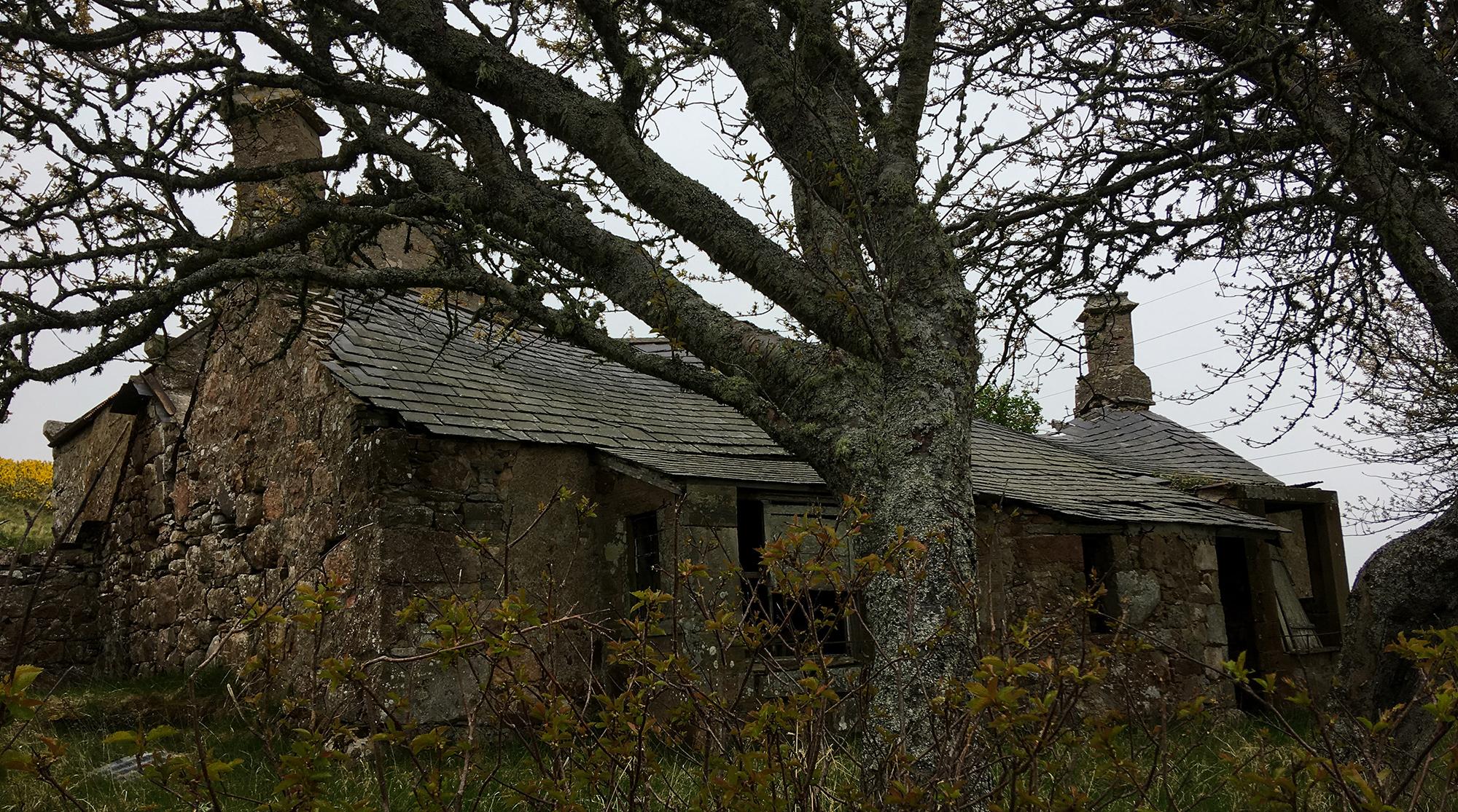 Verlassenes Steincottage mit Baum davor