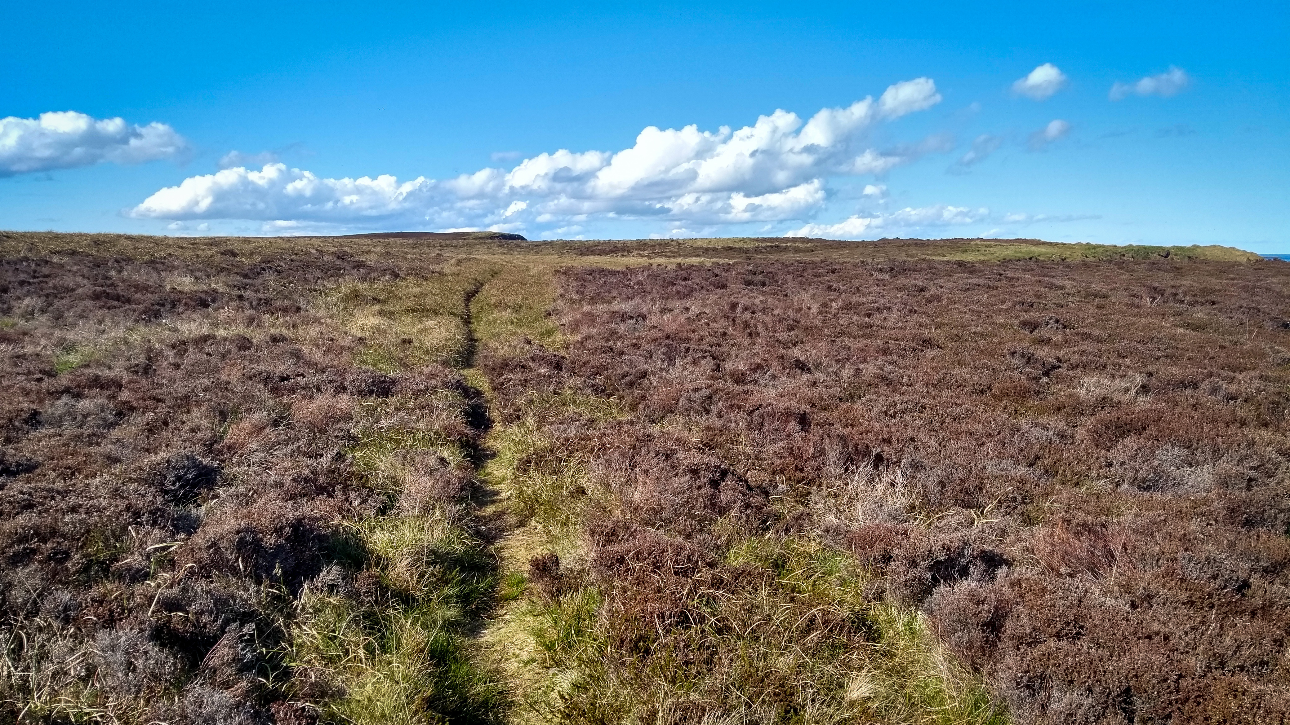 Heidelandschaft und Wanderpfad auf dem letzten Etappenstück bis John o'Griats