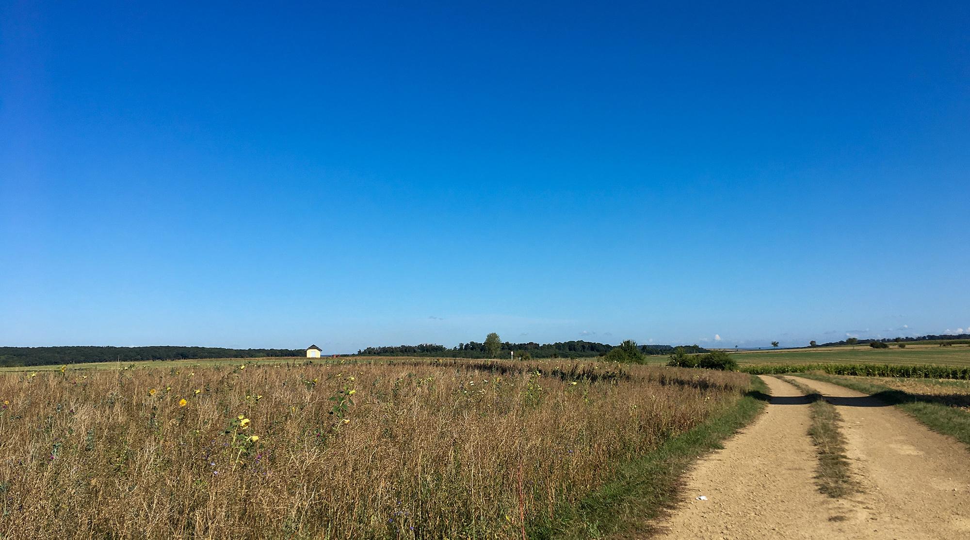 Hochebene mit Ackersaum aus Wiesenblumen bei Boursdorf