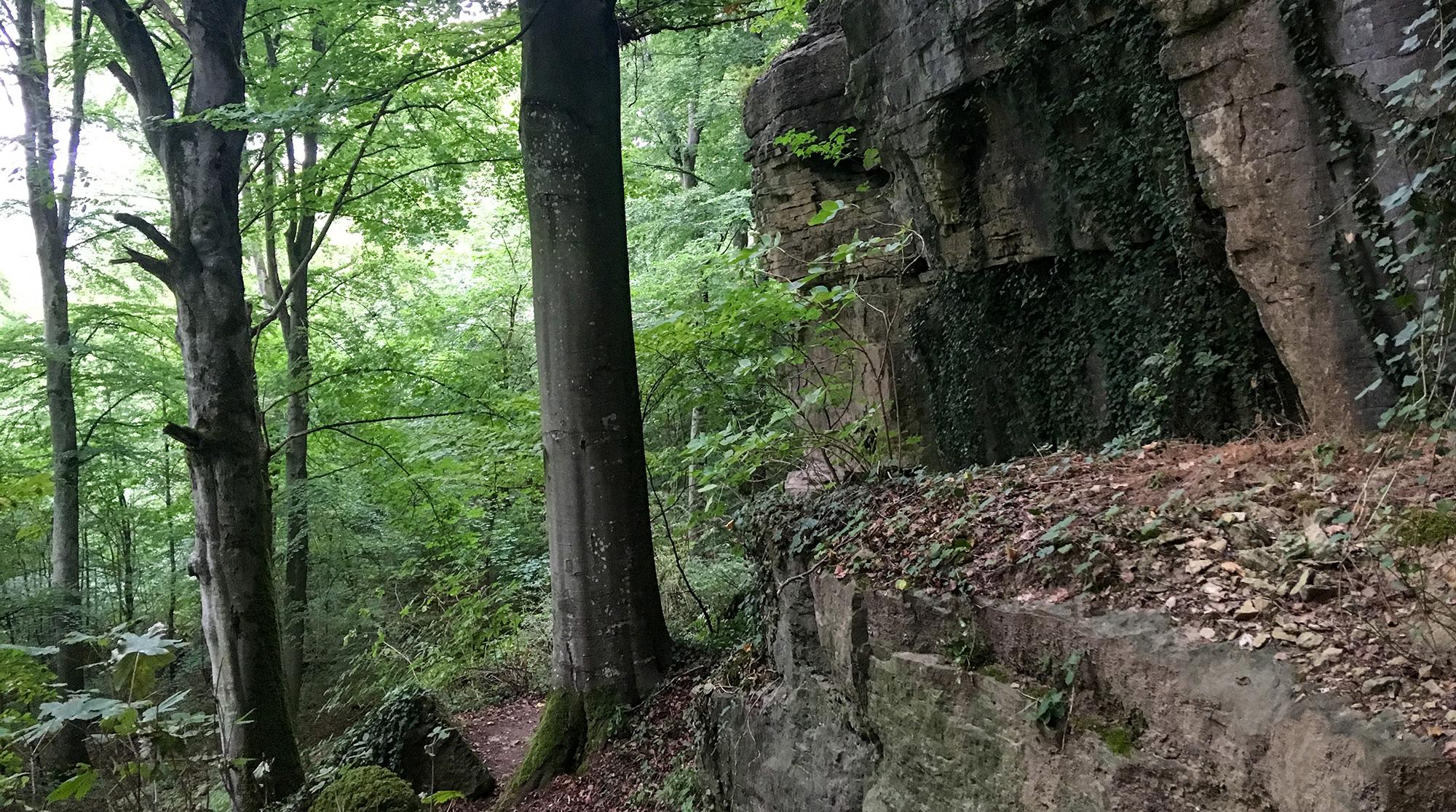 Felsformationen im Wald im Sauertal
