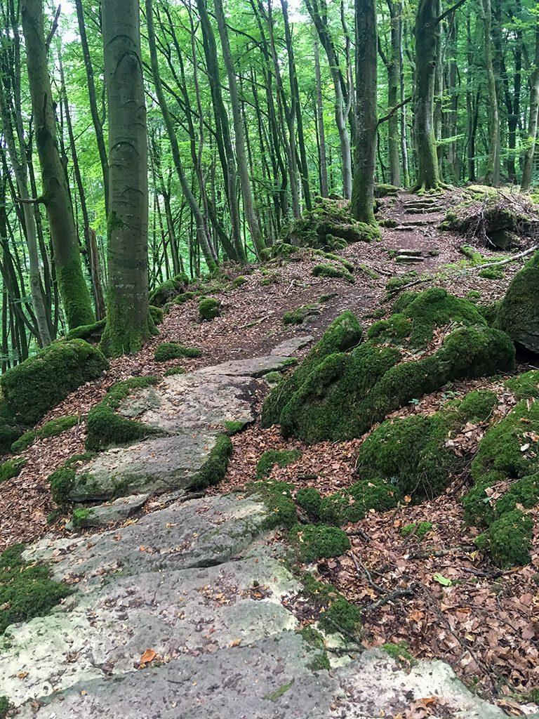 Waldweg mit Steinplatten im Sauertal