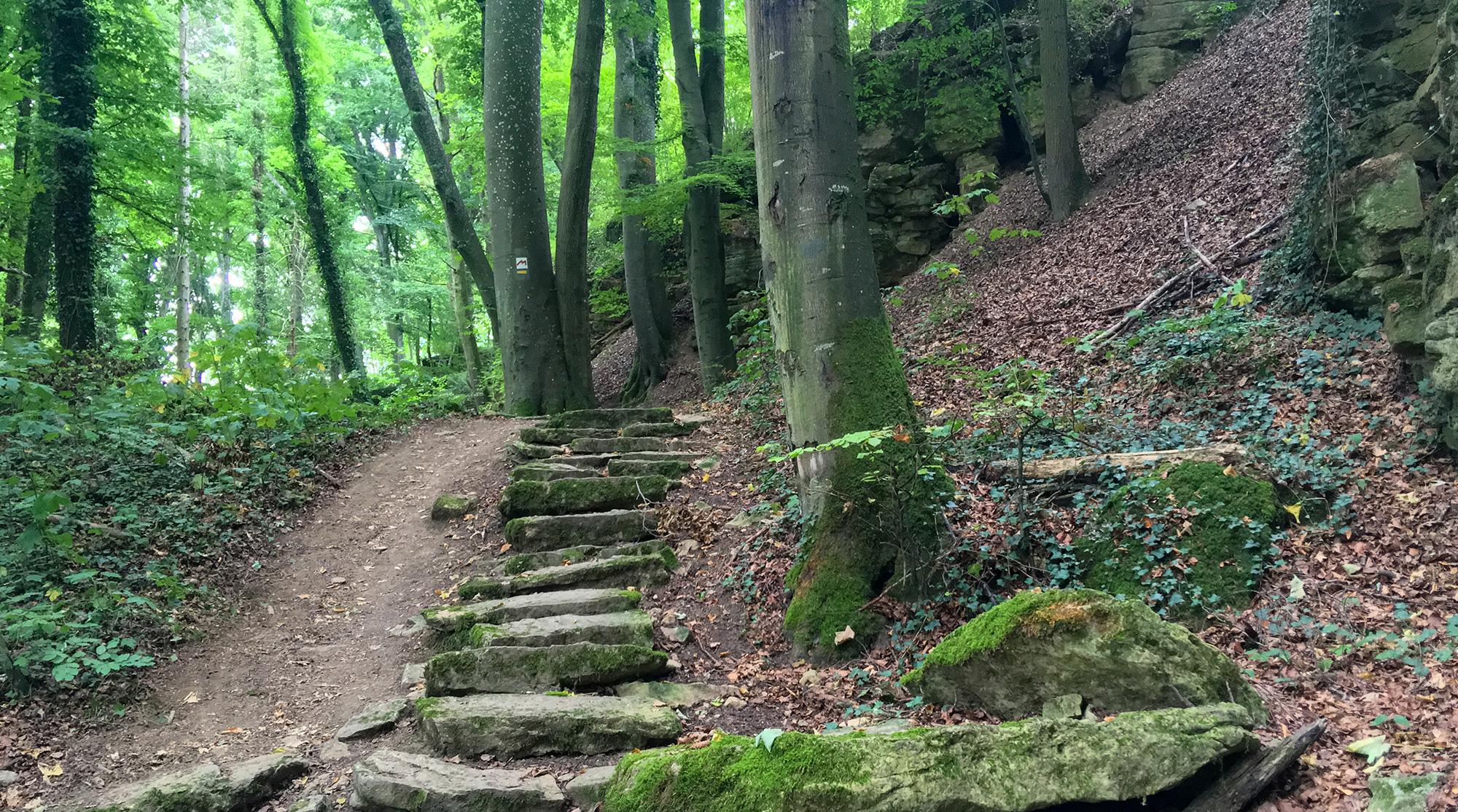 Felstreppen im Wald am Roudescgleff Felsen