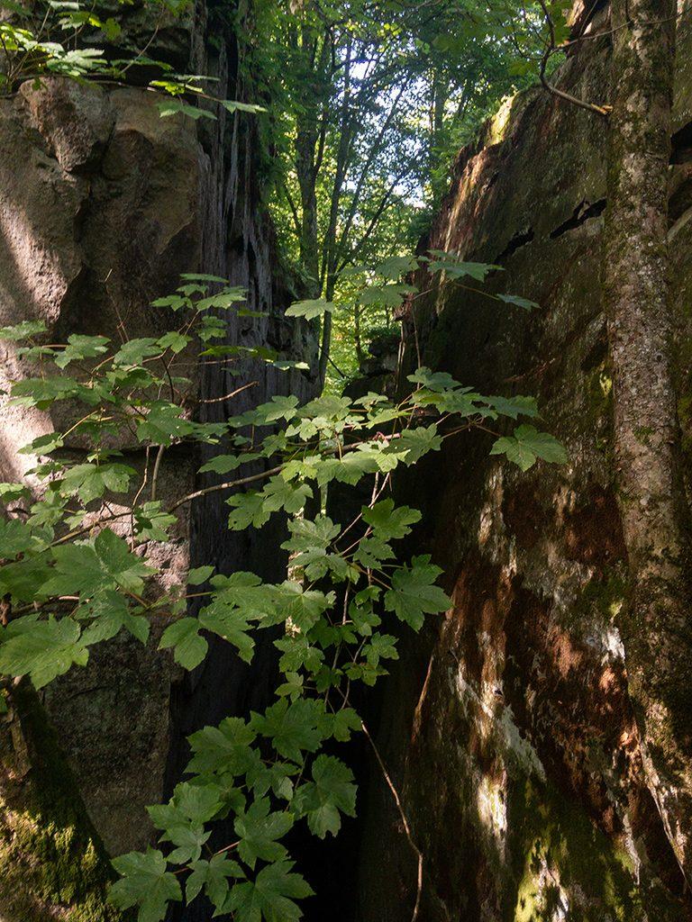 Oberer Teil einer tiefen und scmalen Schlucht auf dem Mullerthal Trail