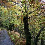 Cycle route 7 - Regentropfen auf Blättern