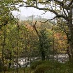 Morgennebel und Herbstwald am wilden Wasser