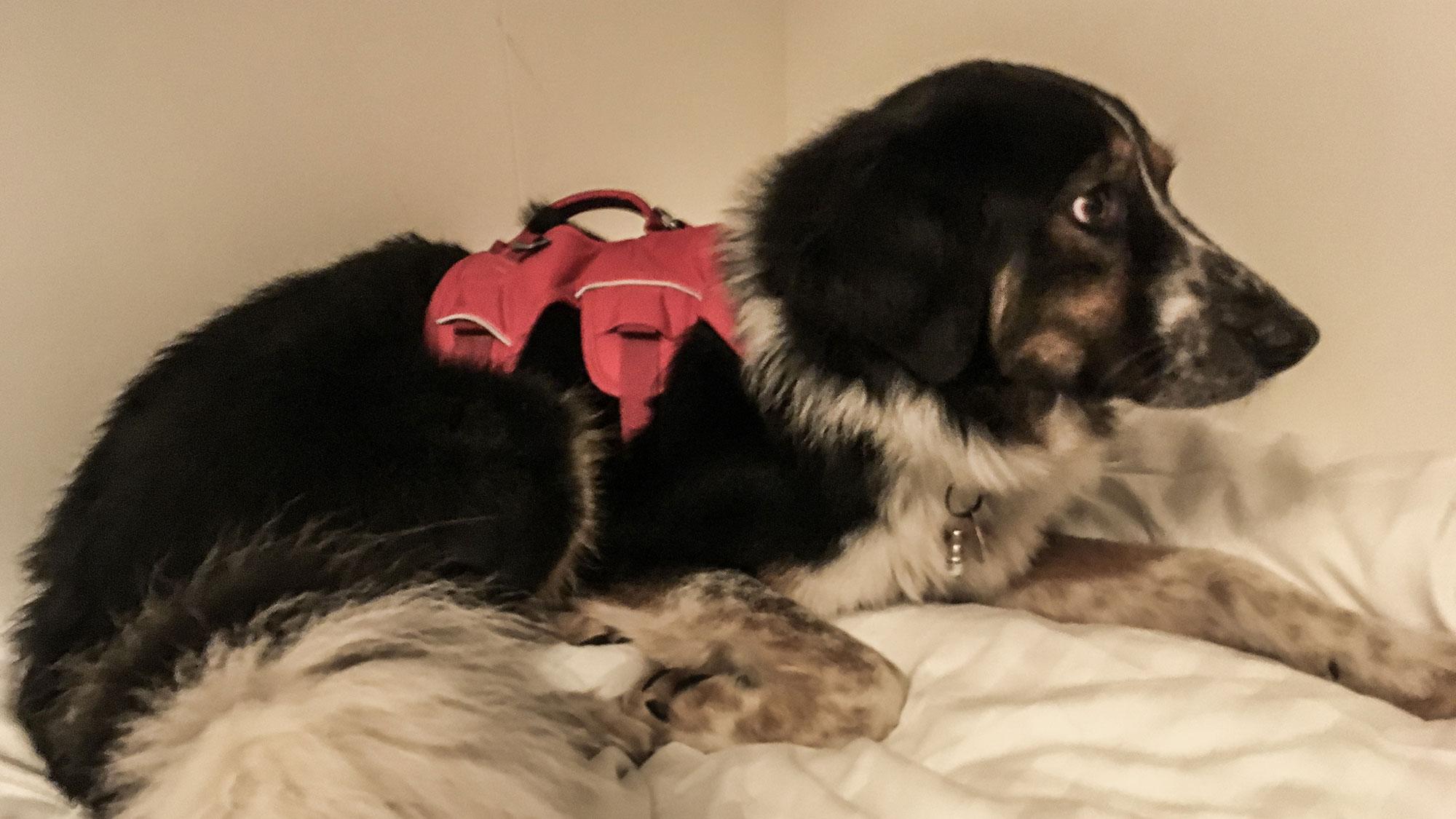 Ängstlicher Hund auf einem Bett in der Kabine der Fähre