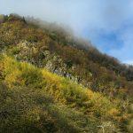 Bewaldeter Felsen am Loch Lubnaig