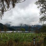 Baumschule am Loch Lubnaig