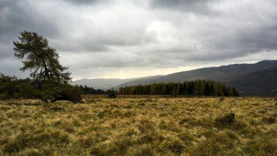 Trockenes Herbstmoor im Ballechin wood