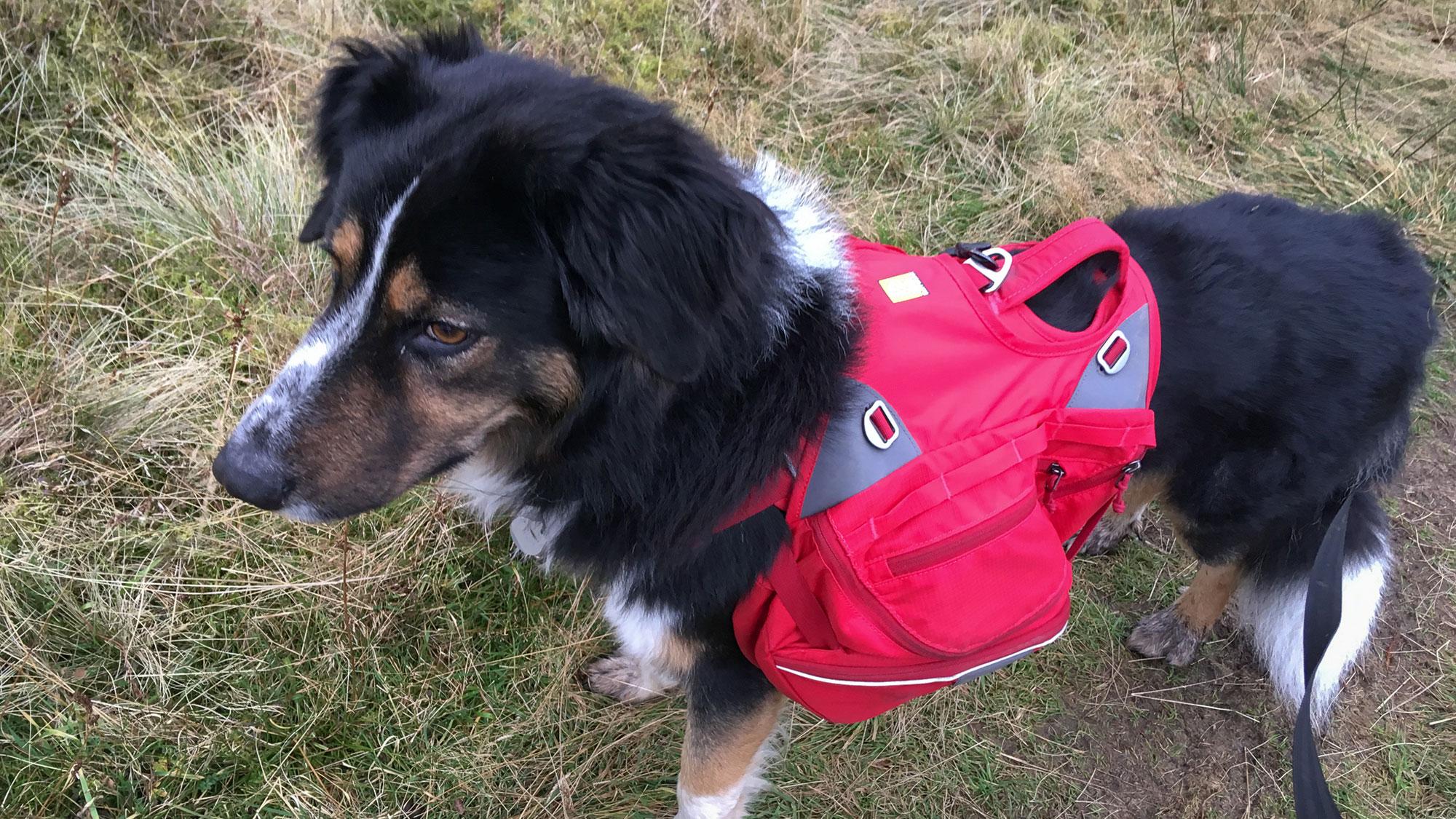 Hund mit rotem Rucksack