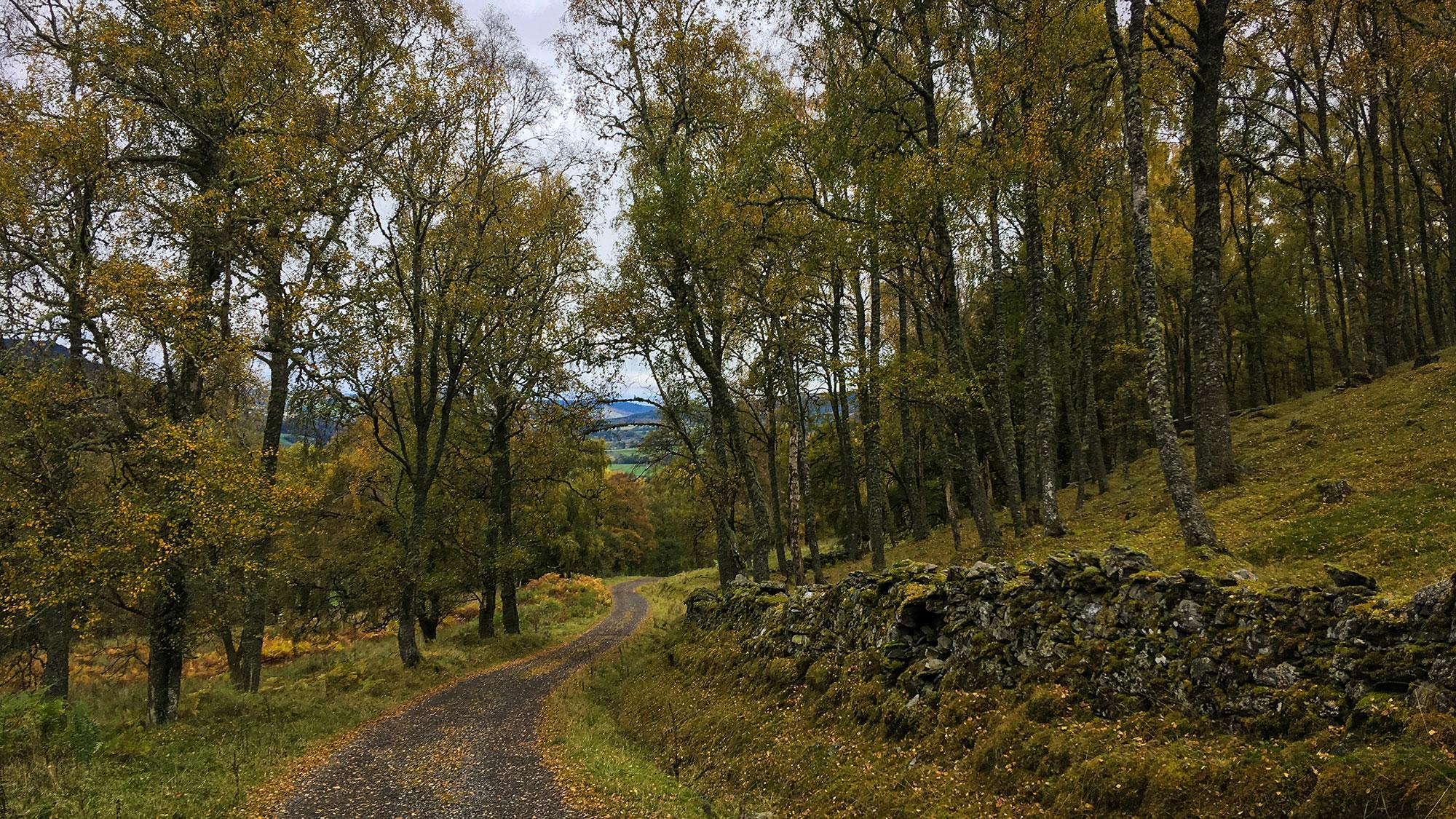 Birkenwald bei Aberfeldy