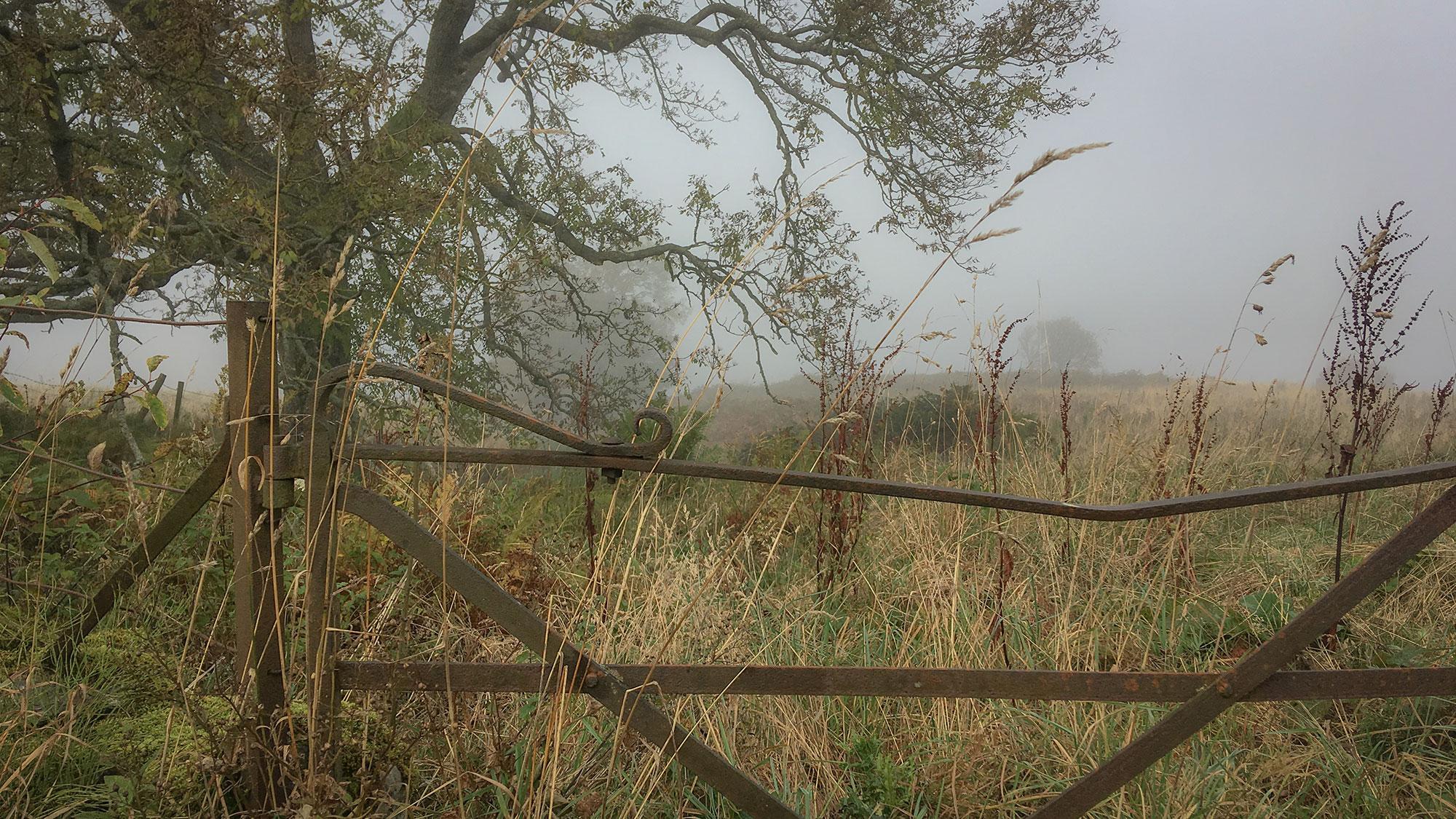 Metallzaun im Nebel
