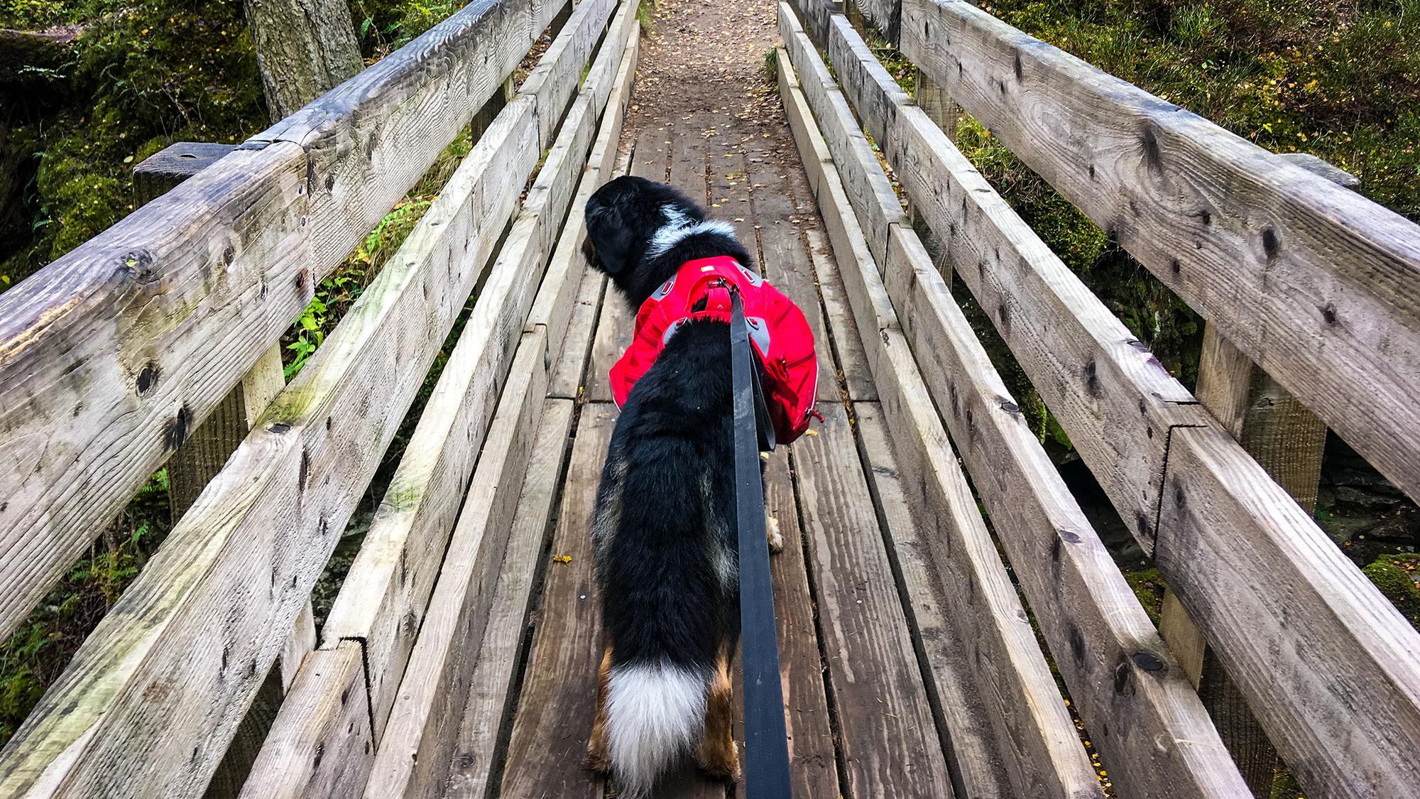 Mozart auf Holzbrücke