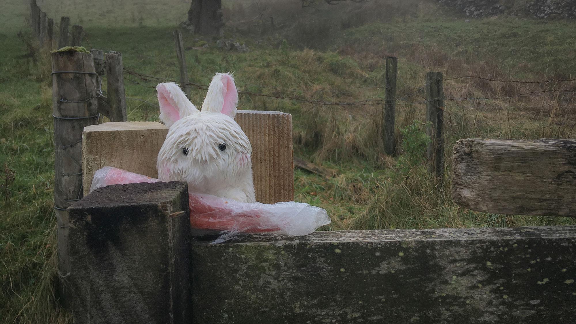 Häschen am Zaun