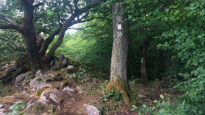 Soonwaldsteig zum Steinbruch Henau