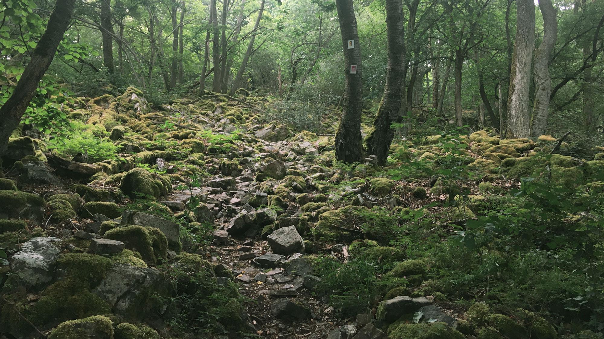 Steiniger Aufstieg im Wald