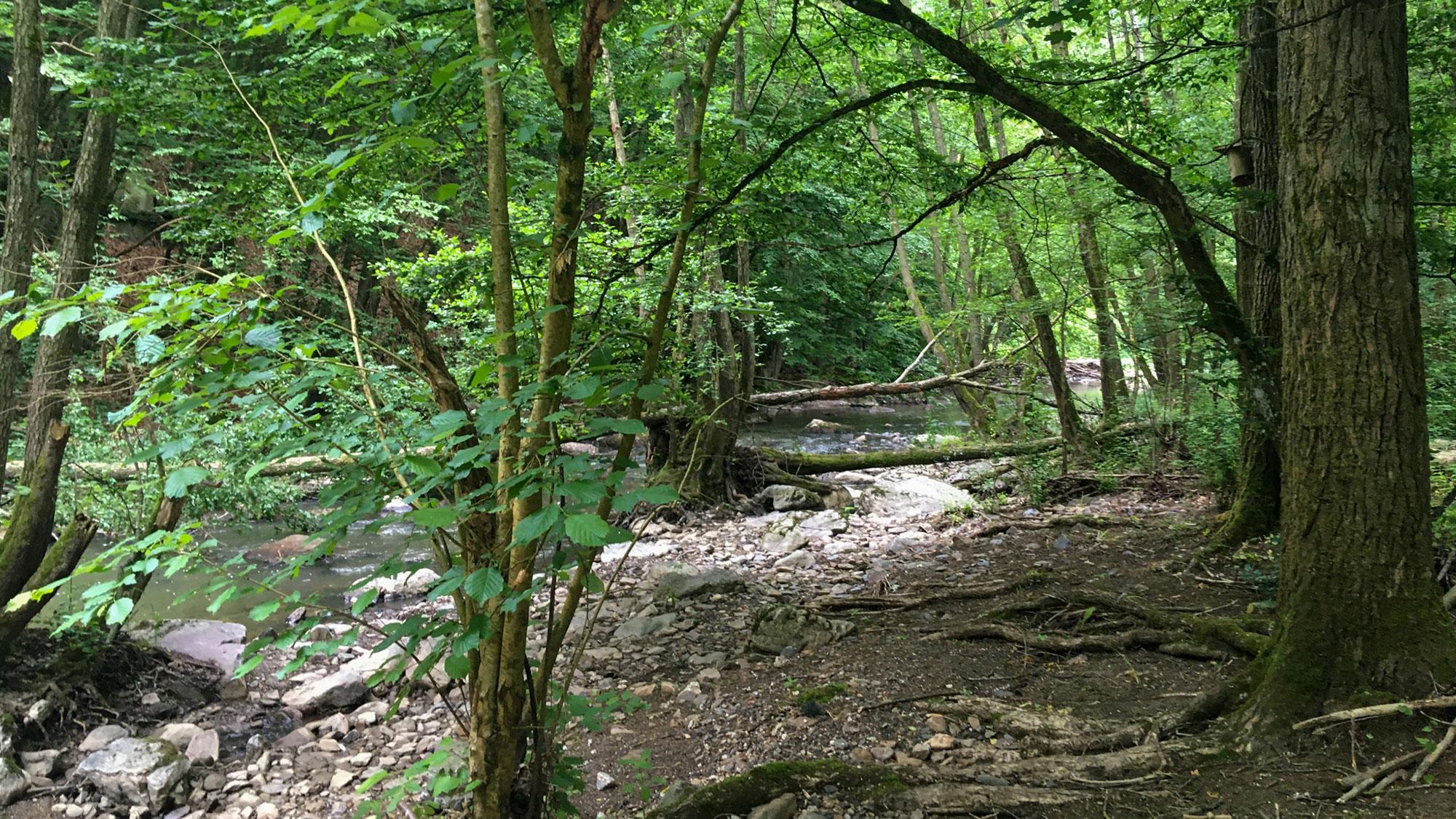 Der Simmerbach im Wald