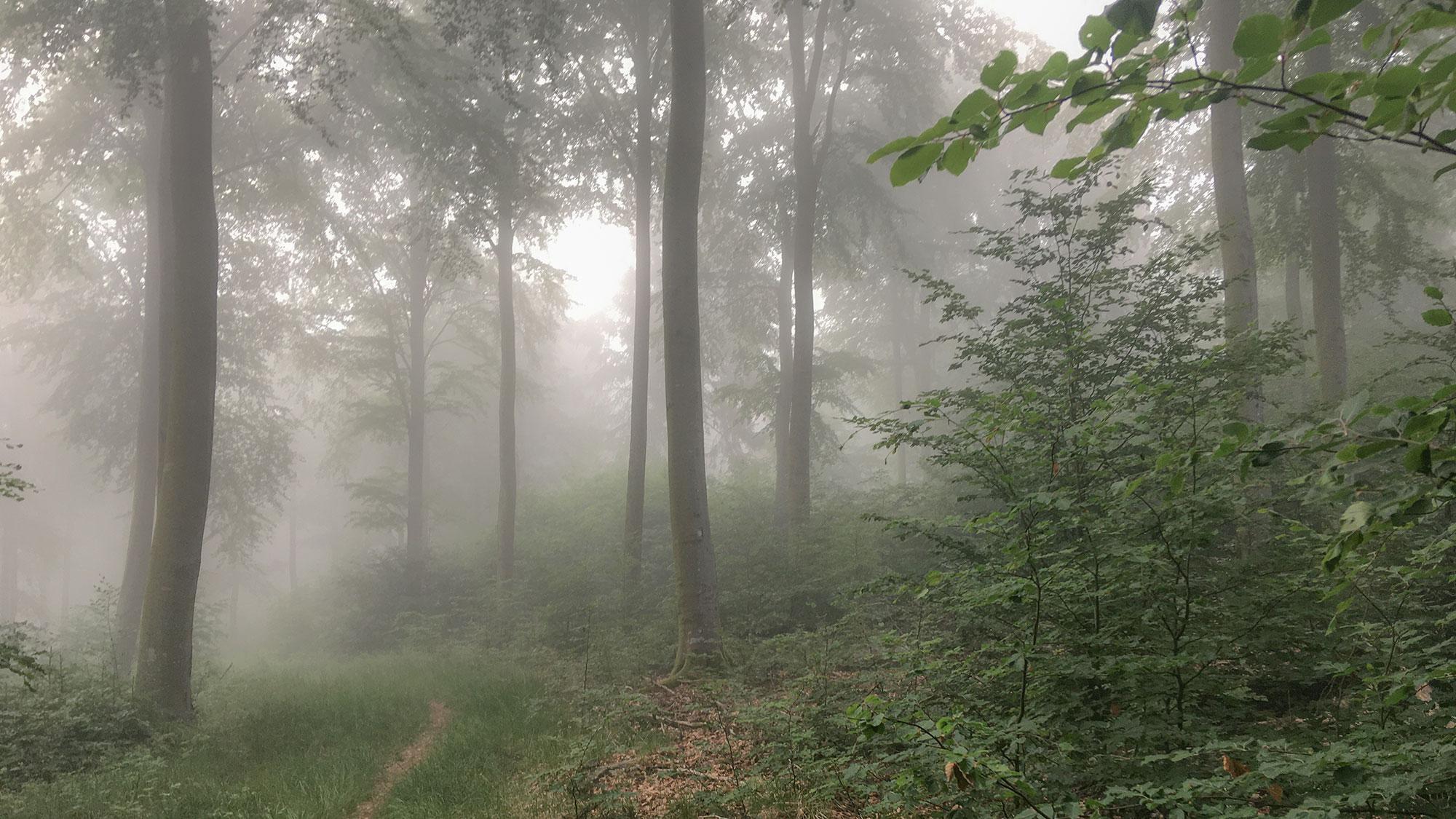 Morgennebel am Ellerspring im Wald