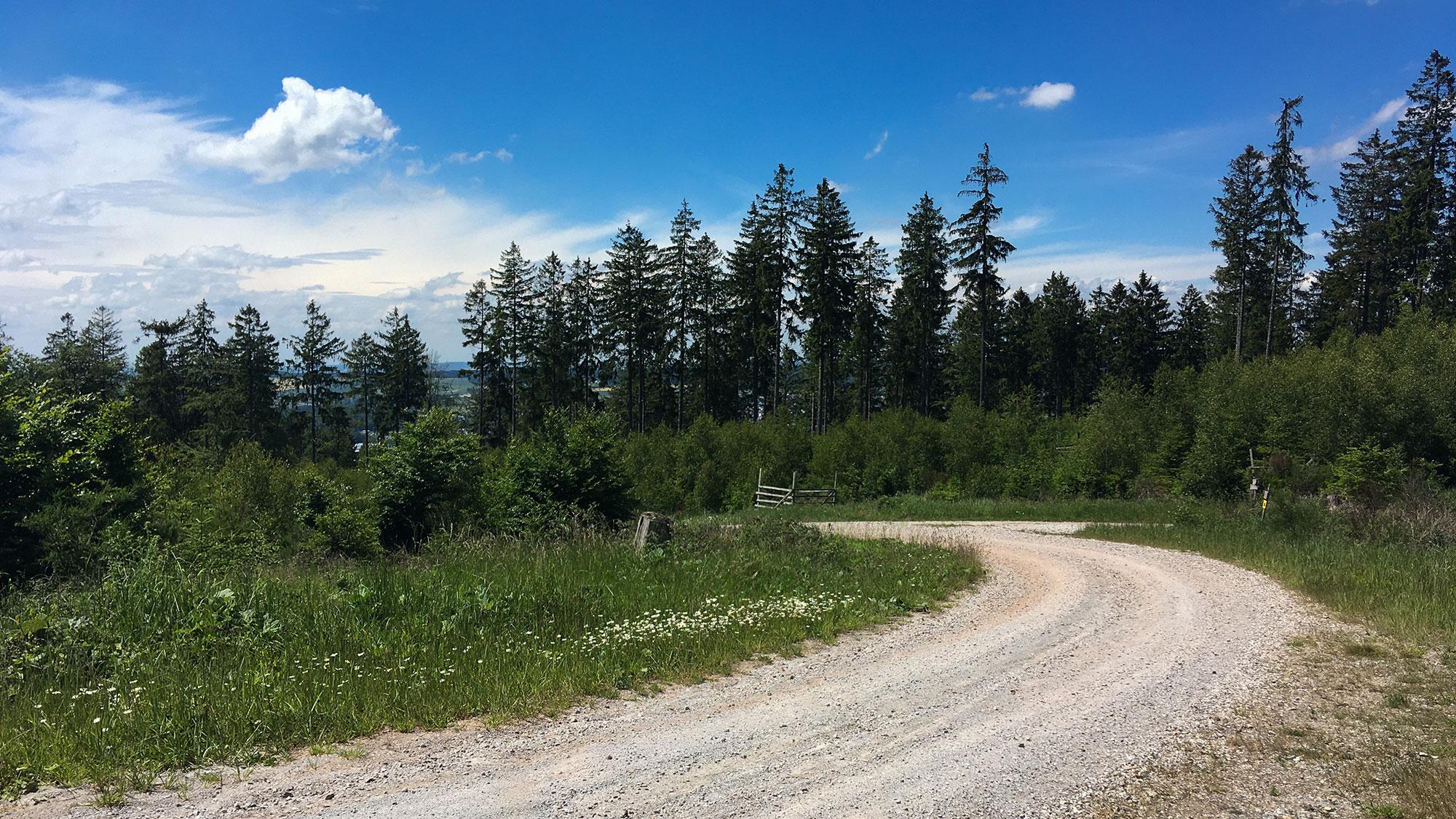Forstweg zur Lauschhütte im Sonnenschein