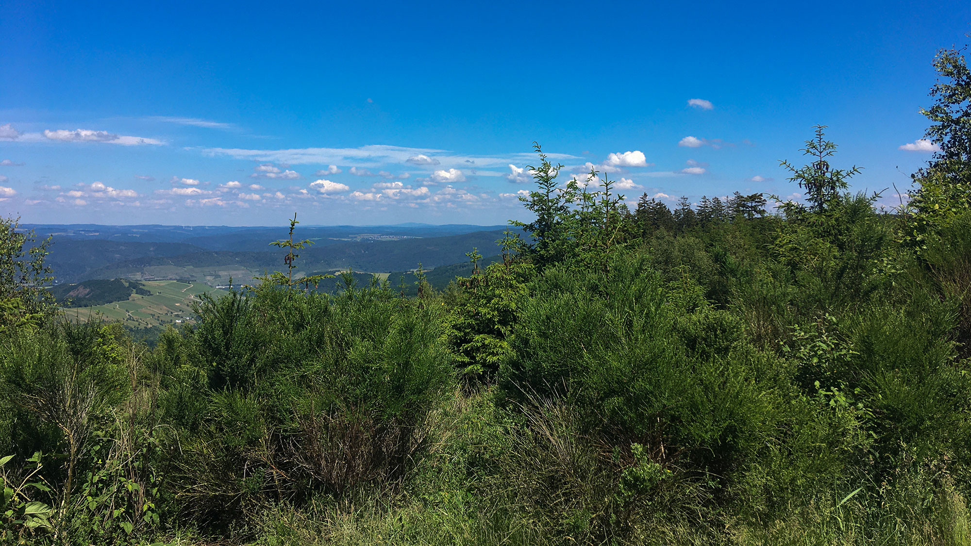 Blick vom Ohligsberg weit über das Rheintal
