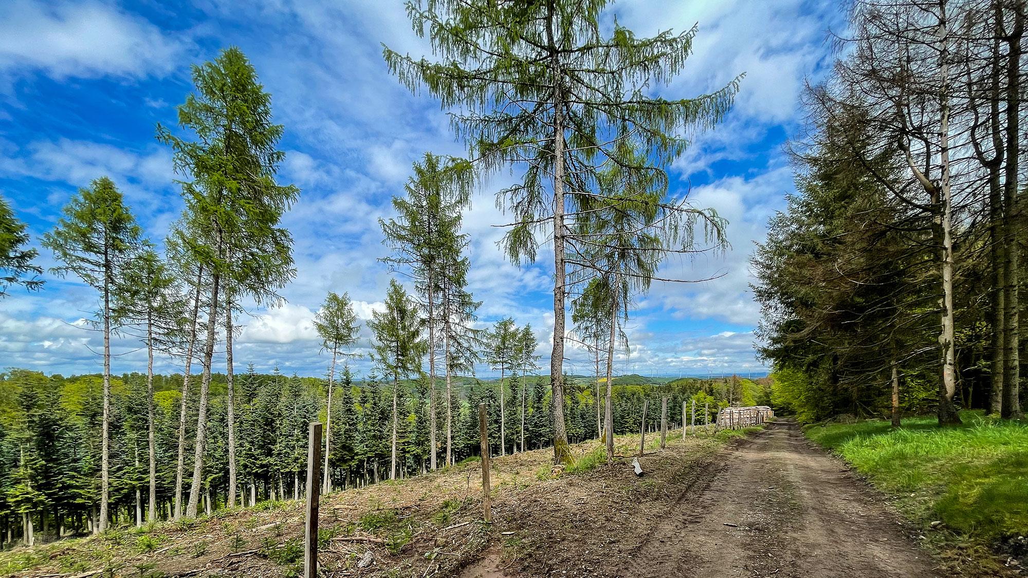Diemelsteig Tag 2 - Wirmighausen bis Trekkingplatz Rhenequelle bei Schweinsbühl