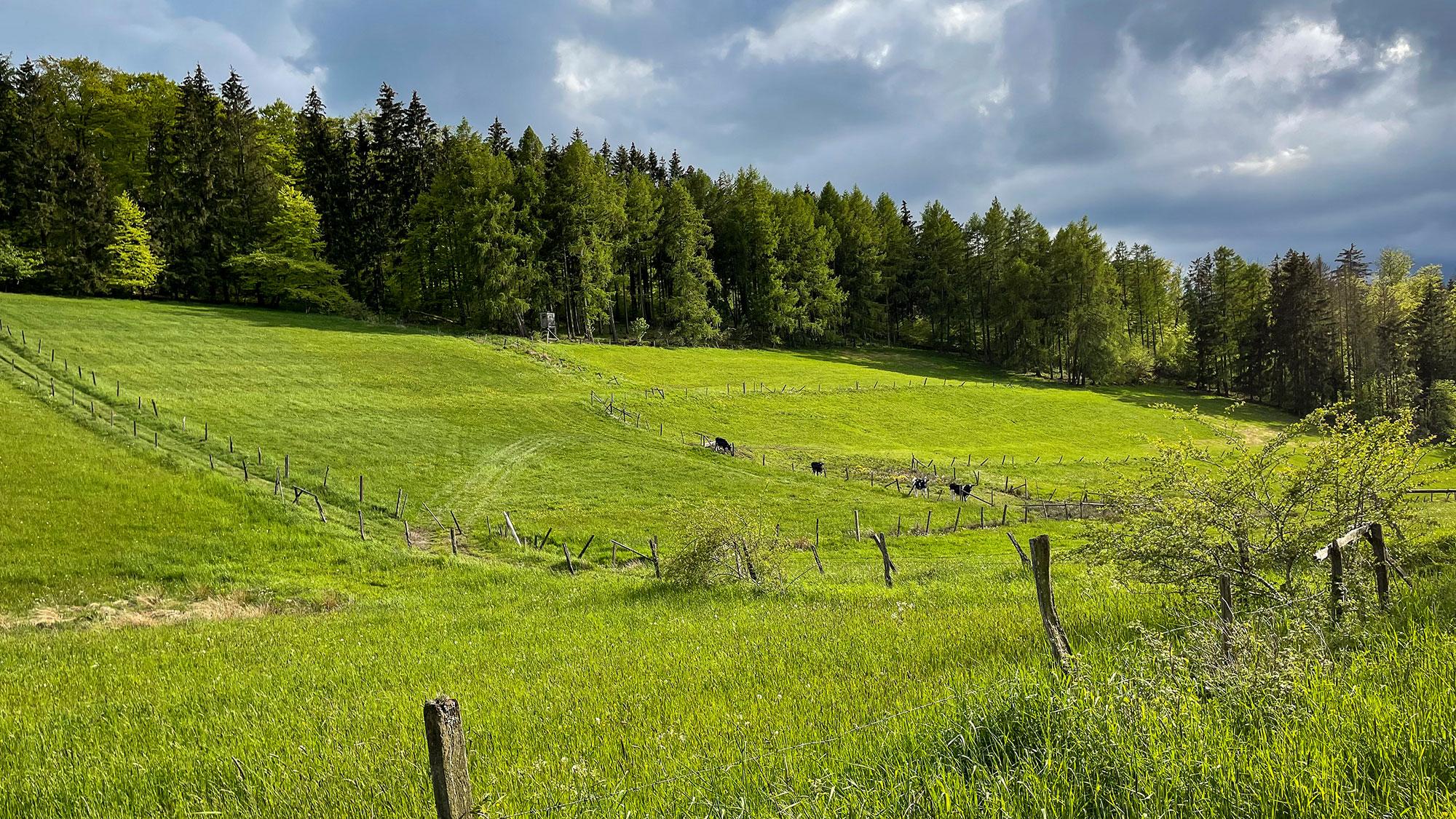 Trekkingplatz-Rhenequelle-bei-Schweinsbühl