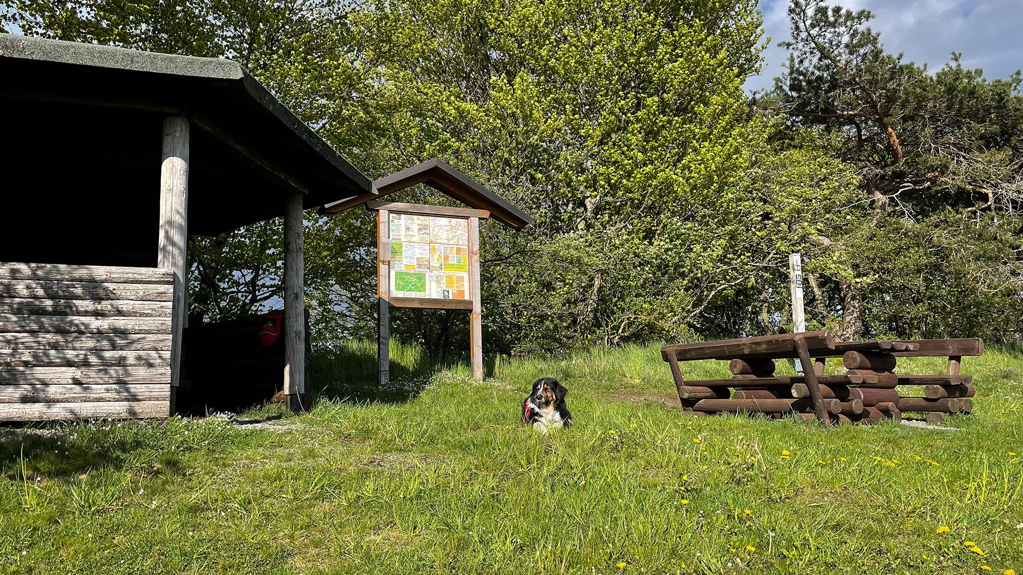 Schutzhütte mit Bank und Hund am Trekkingplatz-Eimelrod